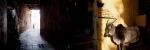 01. Sonar Kella_Jaisalmer Fort_Sarker Protick