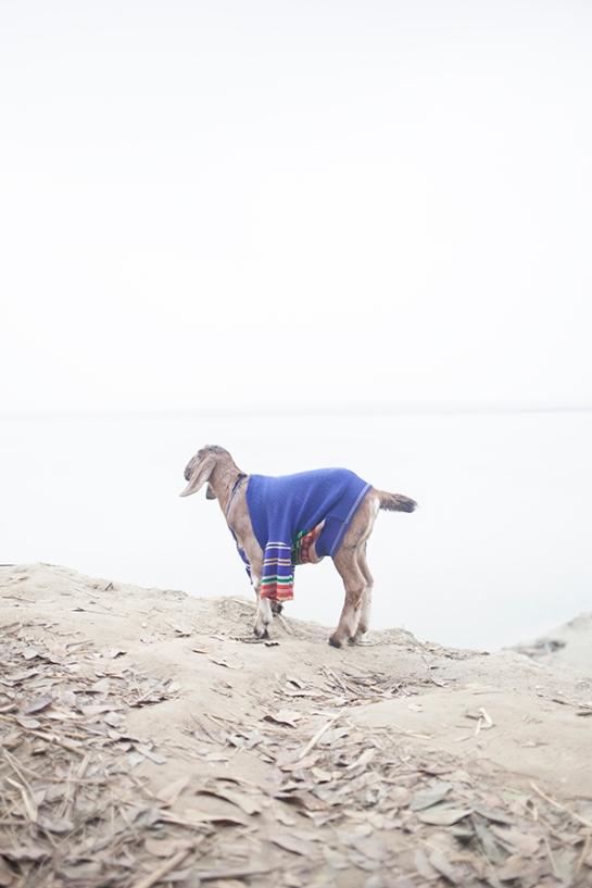 The Melancholic Goat