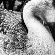 Ducks_004