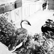 Ducks_006
